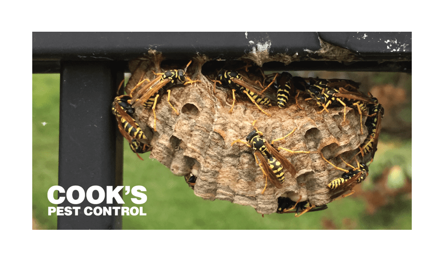 Image showing Paper Wasps: Mean to You, Mean to Each Other