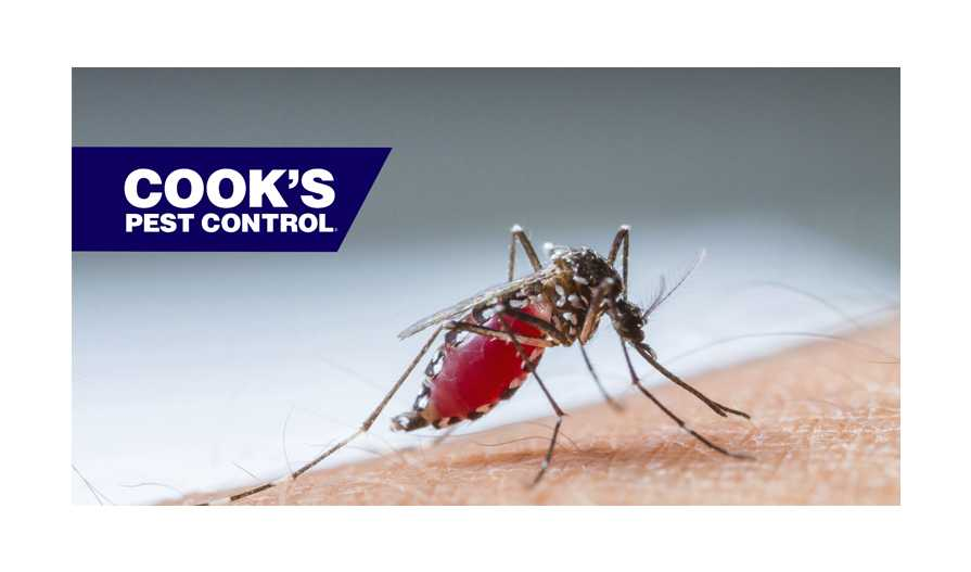 Image showing Pest Profile: Mosquitos – A Look into the Life of our Backyard Predator