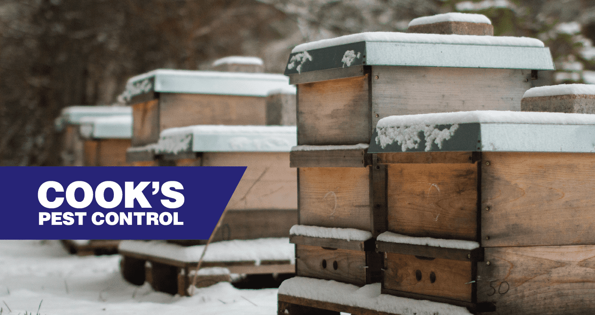 Image showing Honey Bees in Winter