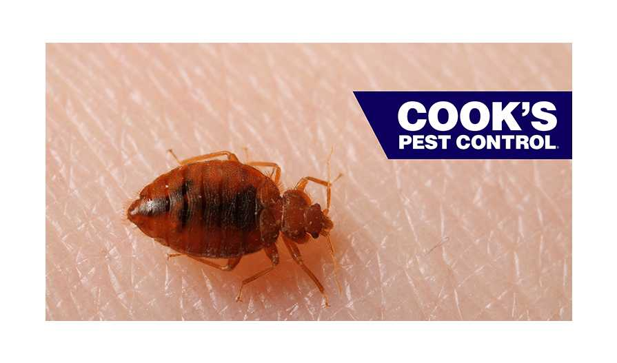 Image showing Sleep Tight, Don't Let the Bed Bugs Bite